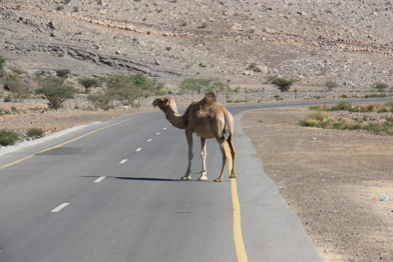 Mietwagenrundreisen im Oman und den Arabischen Emiraten